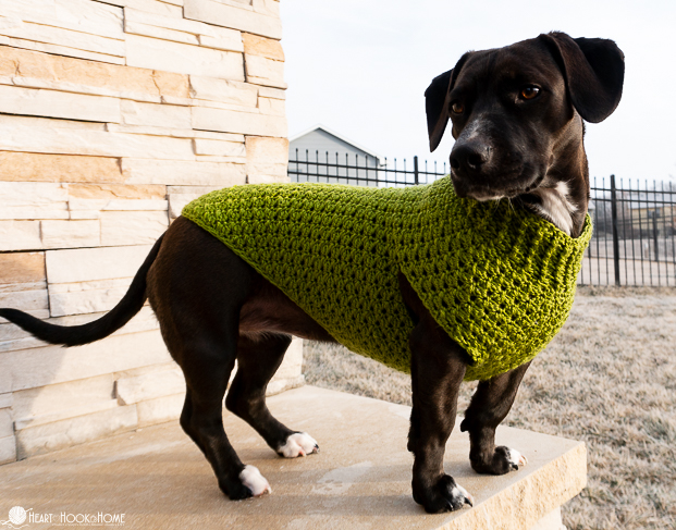 A dachshund mix standing on a step wearing a green sweater.