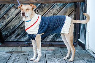 A big dog in a blue, white, red sweater.